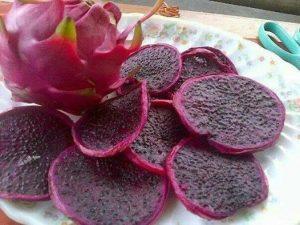 bibit buah naga hitam