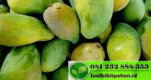 Mangga Arum Manis