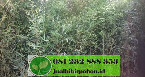 jual bambu jakarta