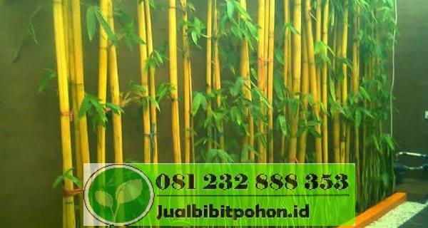 bambujakarta3