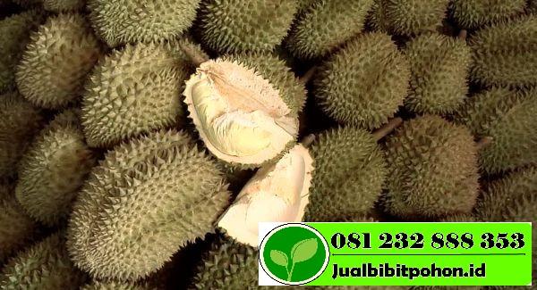 651055584 durian stacking abundance bangkok 1 1