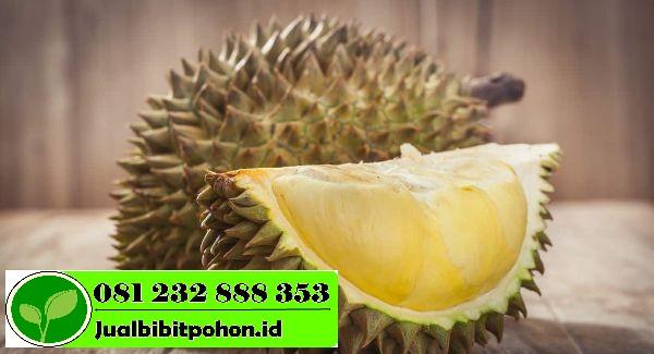 buah durian 1 1
