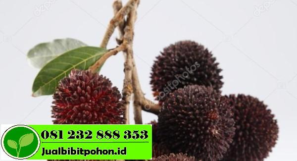 depositphotos 93168178 stock photo pulasan or kapulasan fruits 1 1