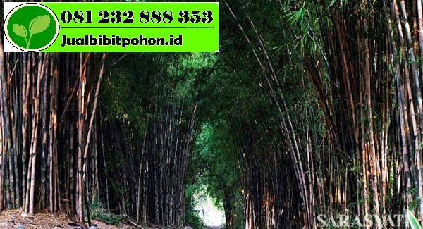 bambu e 1 1