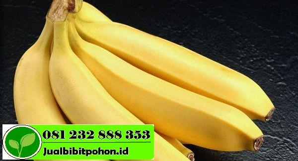 bananes3 1 1