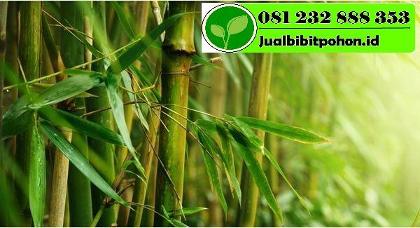 kisah daun bambu ajaib dari negri china 1 1