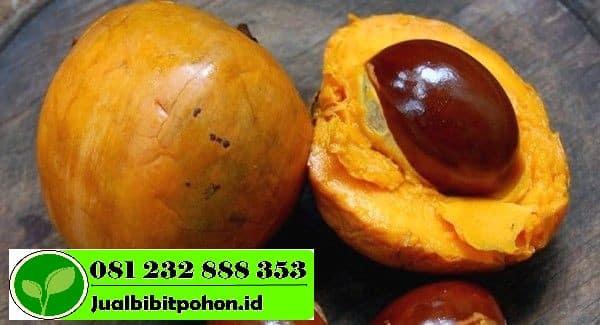 Canistel Fruit 1 1