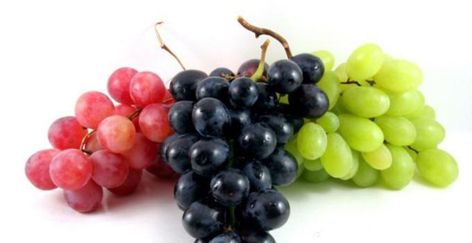 Jual Bibit Anggur Kota Makassar